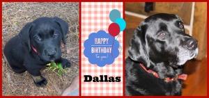 happy birthday dallas